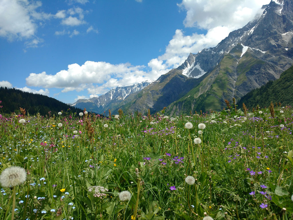 Swiss Alps Spring