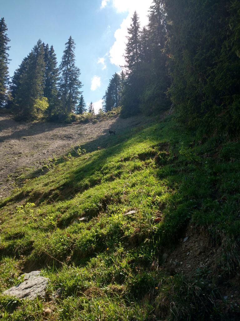 Sulwald - Saustal