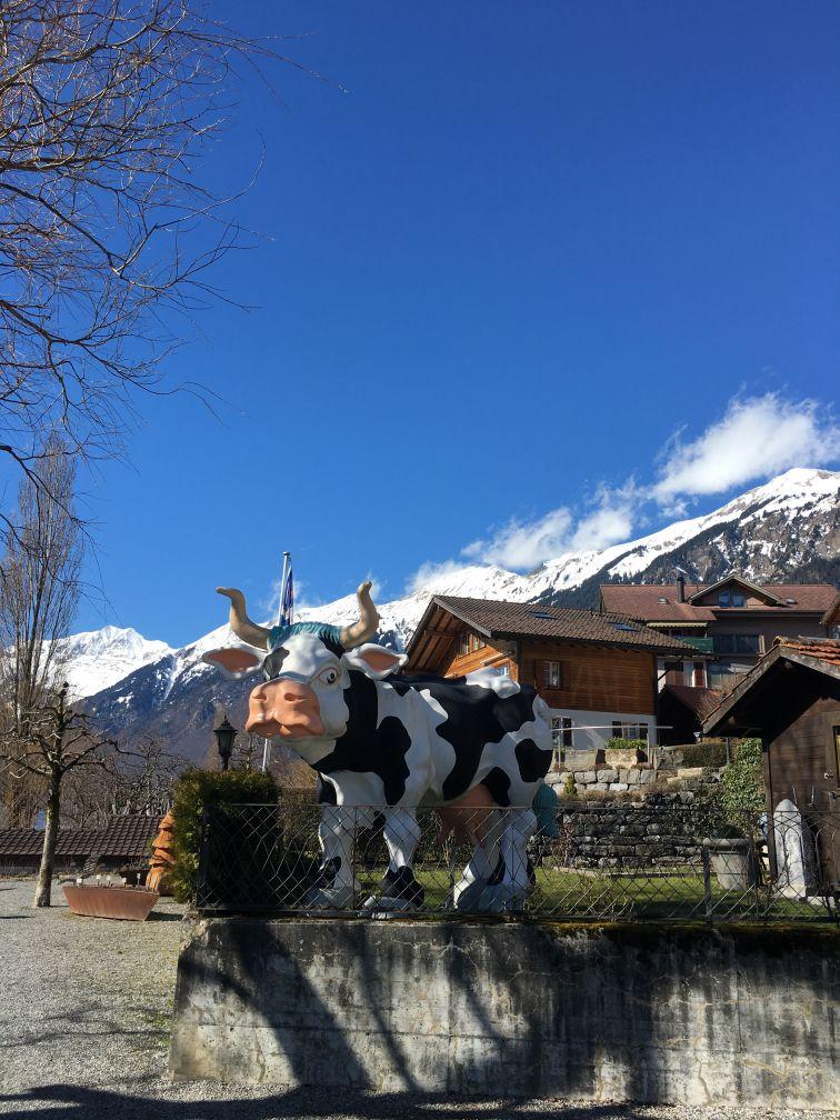 Brienz cow