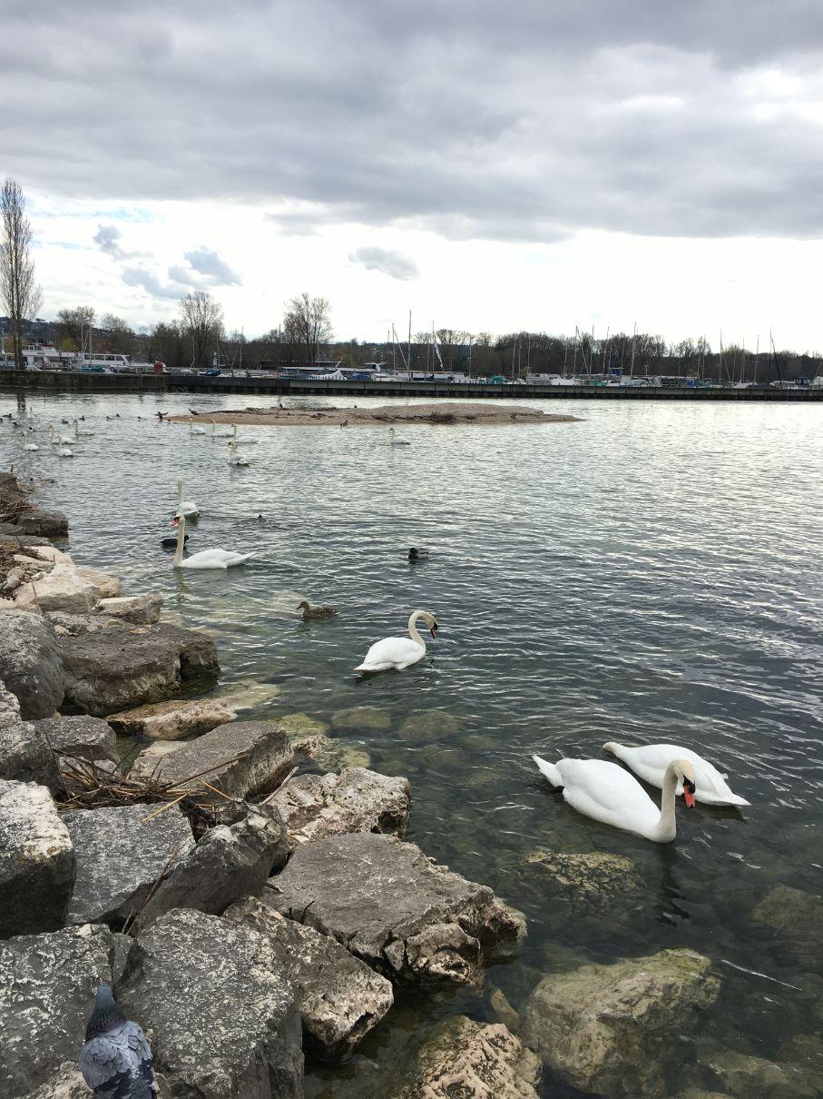 Biel lake Switzerland