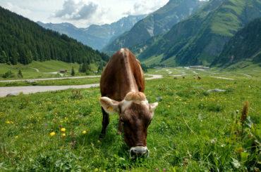 Glarus Region Hiking