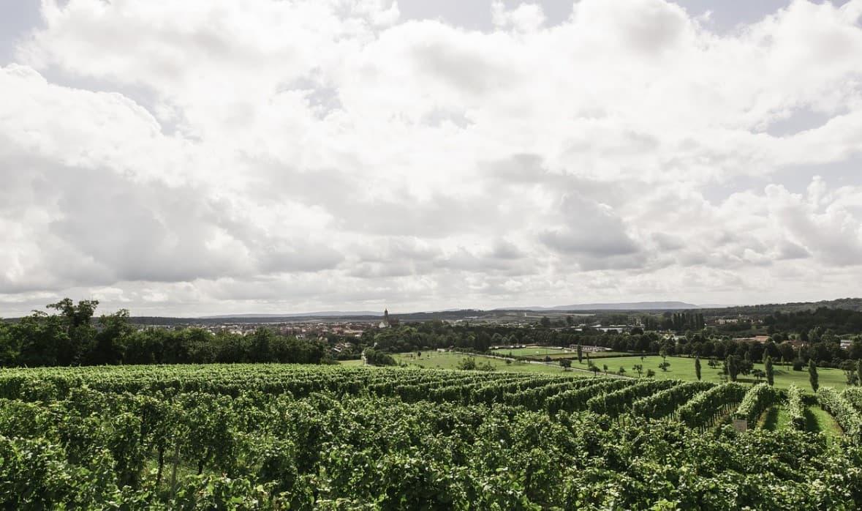 Poschiavo Vineyards