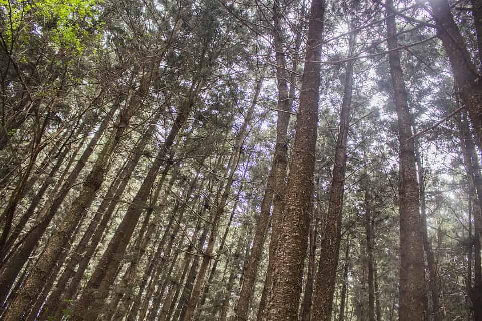 Aberdare forest hiking trail