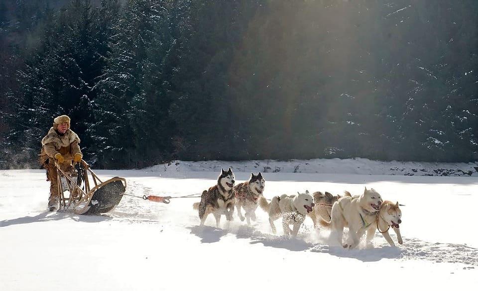 Dog sledding Tufjord