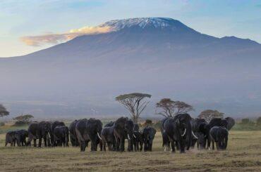 Nairobi to Kilimanjaro