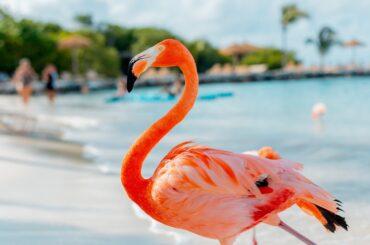 Jamaica or Aruba